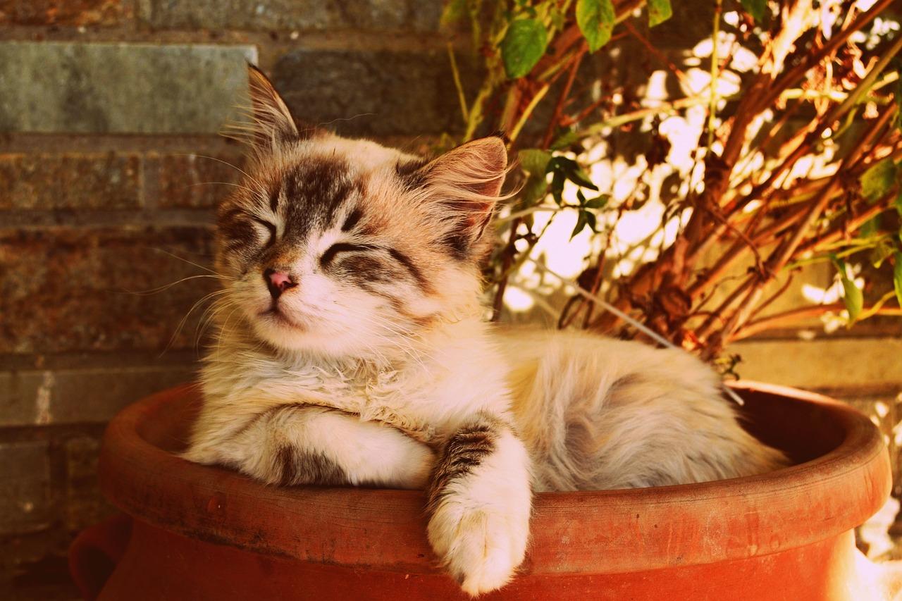 kitten-asleep-in-a-pot-1995961_1280